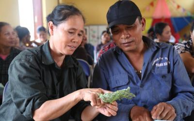 Giảm thiểu tình trạng sử dụng thuốc sâu qua việc khuyến khích người dân canh tác hữu cơ