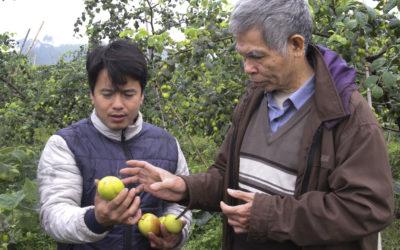 Mô hình táo thành công mang lại hiệu quả kinh tế cao